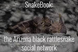 SnakeBook: the Arizona Black Rattlesnake social network.